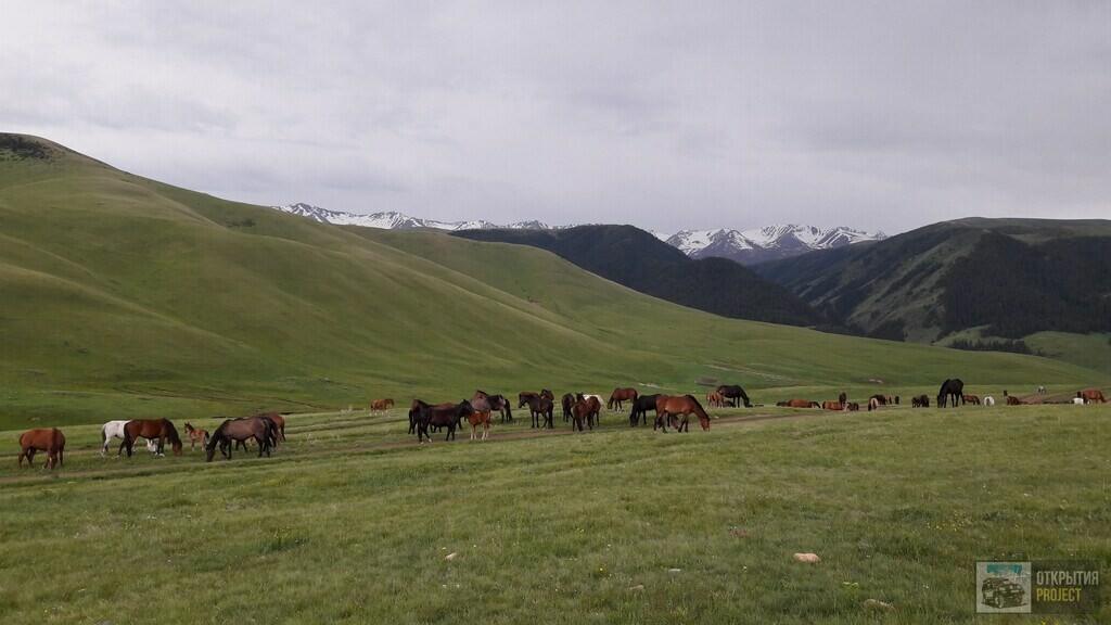 Лошади на плато Асы
