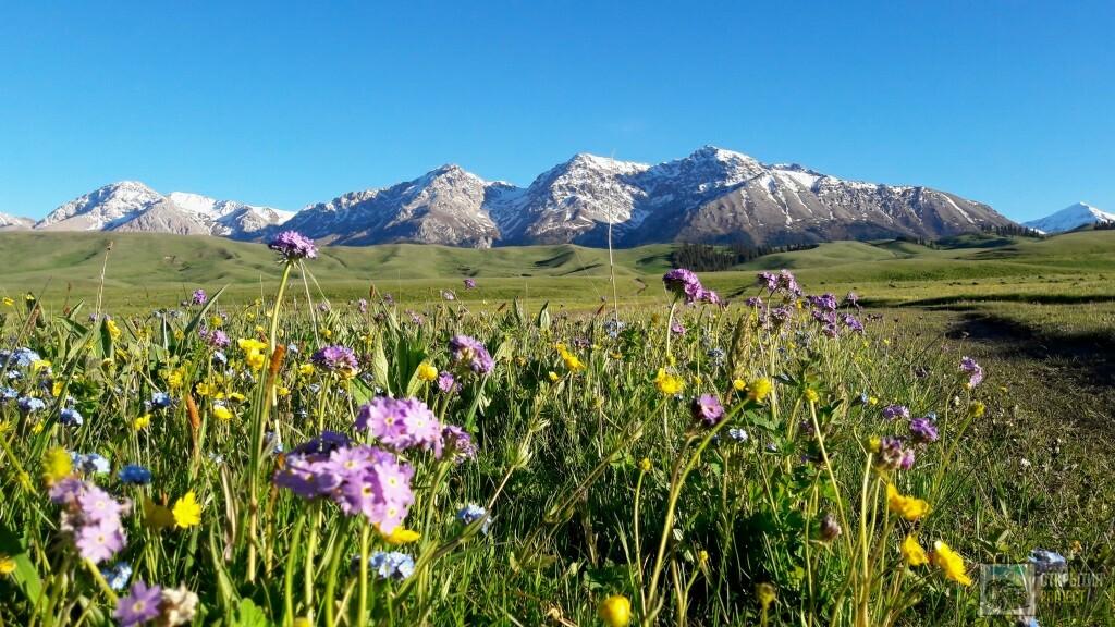 Альпийские луга Казахстана